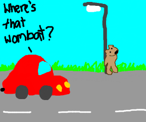 Wombat tries not to draw attention of red car