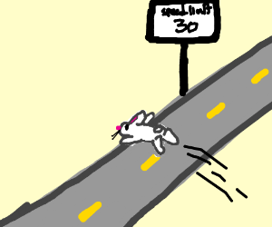 Rabbit dashes across street