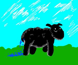 Black sheep poop blue sprinkles
