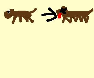 Cycle of dead dog life