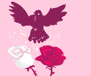 Purple raven pollinates a rose