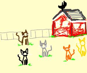 Cat Farm