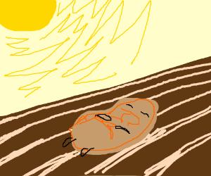 Potato Rotting in the Sun
