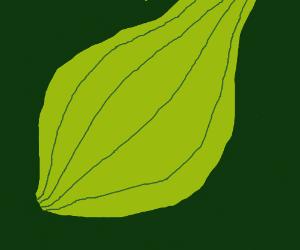 well drawn onion