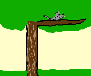 A cat f*cking in the top of a tree