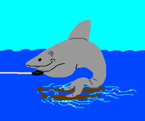 sharks waterskiing