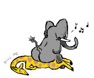 Elephant sits on giraffe again