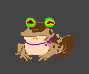 Bloodshot eyed frog