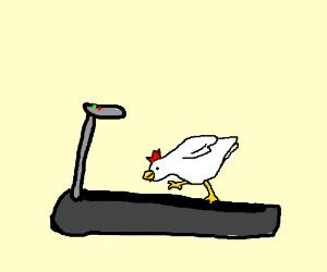 chicken on a tredmill