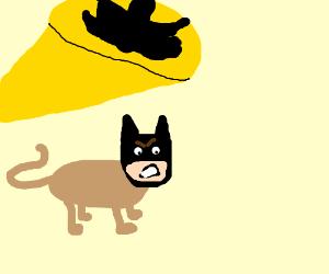 I'm Batcat
