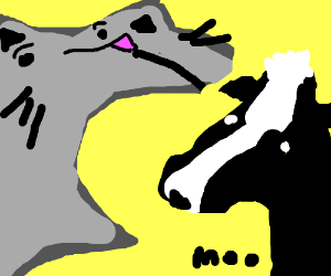 A cat eating a cow