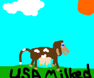 USA Army milking cows.