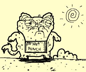 Kitten wearing a 'Do not punch' sign