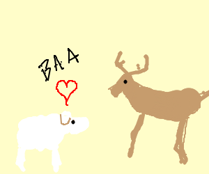 Sheep is in love with deer