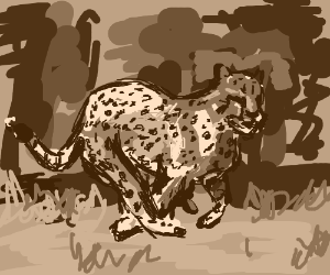 Savannah cheetah in mid-gait
