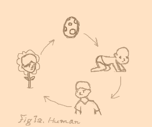 The cycle of human life