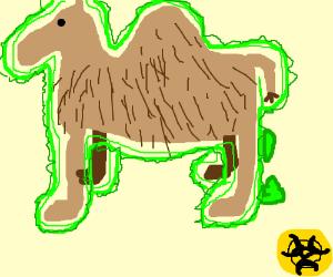 radioactive camel defacates