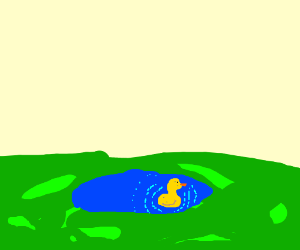 duck at the pond