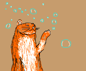 Cat and Bubbles