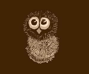 A superb owl.