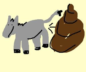 Donkey made a big S.H.I.T