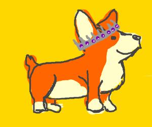 Royal corgi w/silver and purple crown