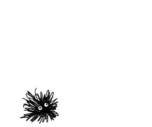 The black fuzzball stared up