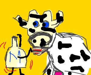 Milk dances in front of cow