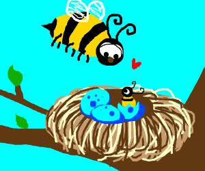 a bee nest
