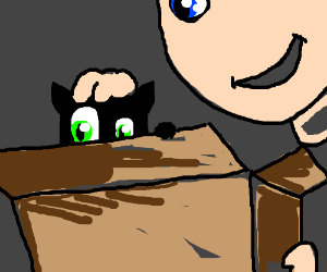 Comforting your cat in a box