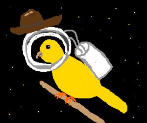 Astronaut cowboy bird!