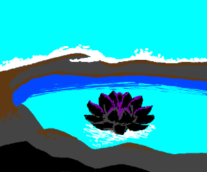 Black lotus in a clean mountain pond