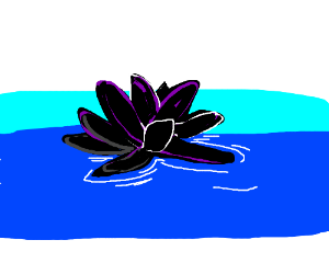 A black lotus floating on a pool of water