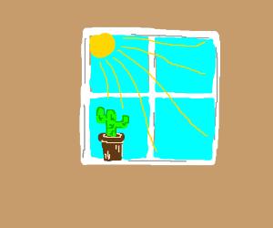The Biedermeier cactus sittin' in the winda'