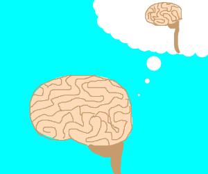 A brain thinks about a brain