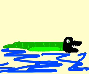 Alligator with black mask