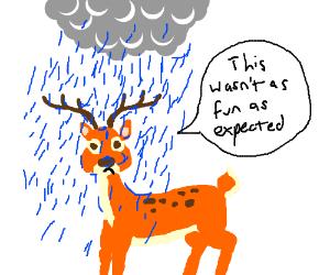 raindeer is bored