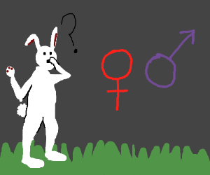 Rabbit confused by gender