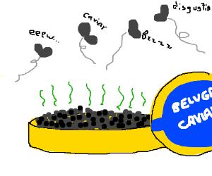 Flies don't like expensive caviar