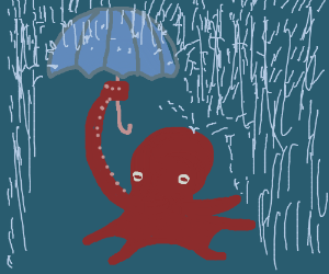 Octopus uses umbrella to stay dry in the rain