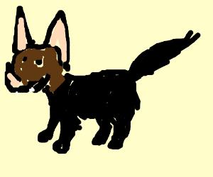 A cat with a bat head?