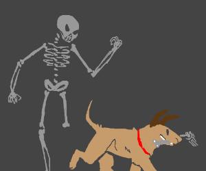 Dog steals bone from skeleton