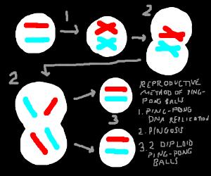 Reproductive Methods of Ping-Pong Balls