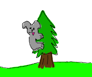 nomnom the koala climbs christmas tree