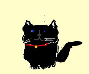 Black cat's left eye is evaporating slightly.