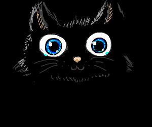 Adorable cat face