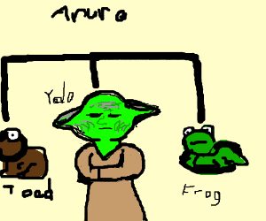 yoda is from the frog family