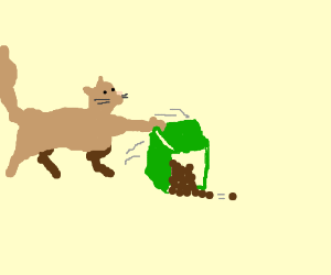 cat dumps round turds out of green box