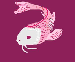 hungry koy fish
