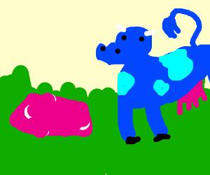 blue cow man made pink butter sponge